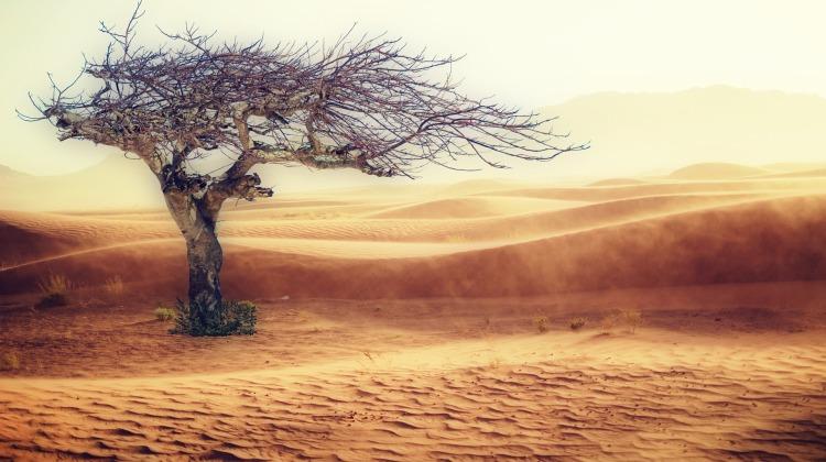 desert-2227962_1920