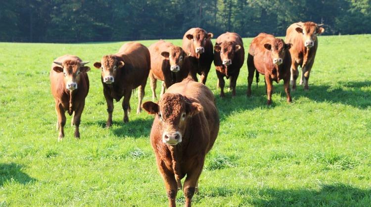 Allevamento di mucche