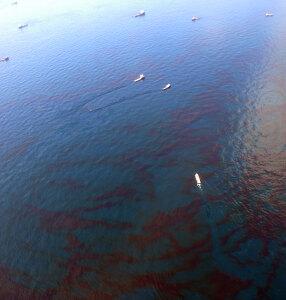 Riprese della fuoriuscita di greggio nel Golfo del Messico, 2010